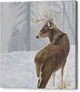 Winter Coat Buck Canvas Print
