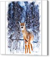 Winter Deer 1 Canvas Print