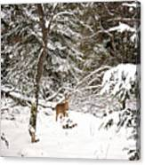 Winter Doe In The Upper Peninsula Canvas Print