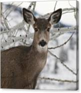 Winter Doe Of The Okanagan Canvas Print