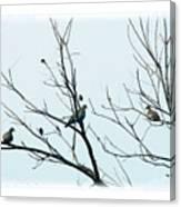 Winter Doves Canvas Print