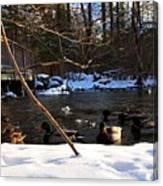 Winter Ducks Canvas Print