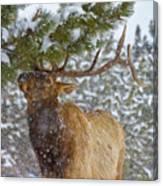 Winter Edibles Canvas Print