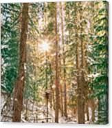 Winter Forest Sunshine Canvas Print