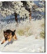 Winter Fun ... Montana Art Photo Canvas Print