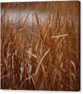 Winter Grass - 1 Canvas Print