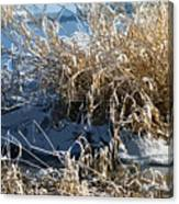 Winter Grass Canvas Print