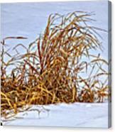 Winter Grasses Canvas Print