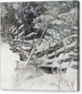 Winter Hare At The Fence Canvas Print