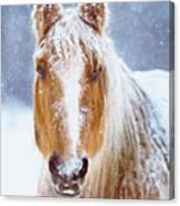 Winter Horse Portrait Canvas Print
