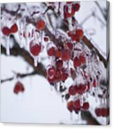 Winter Ice Berries Canvas Print