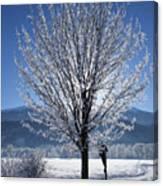Winter In Innsbruck Canvas Print