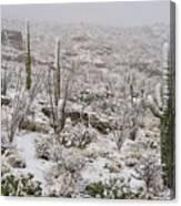 Winter In The Desert Canvas Print