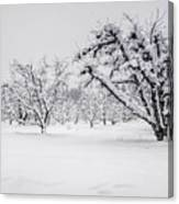 Winter In The Orchard Canvas Print