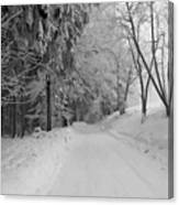 Winter In The Woods Canvas Print