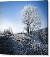 Winter Landscape Of Trees Covered With Frost Canvas Print