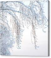 Winter Landscape With Snow-covered Trees Canvas Print