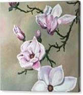 Winter Magnolia Blooms Canvas Print
