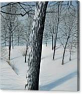 Winter Maple Canvas Print