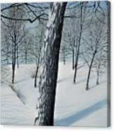 Winter Maple Canvas Print