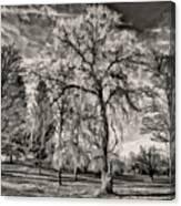 Winter Marches On Polaroid Canvas Print
