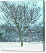 Winter Mimosa Painterly Canvas Print