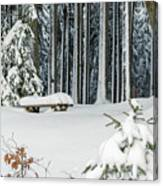 Winter Moments In Harz Mountains Canvas Print