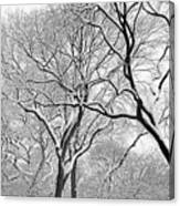 Winter Panorama  Canvas Print