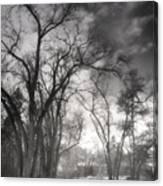 Winter Pathways Canvas Print