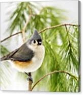 Winter Pine Bird Canvas Print
