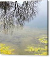 Winter Pond Reflections Canvas Print