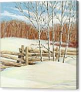 Winter Poplars 2 Canvas Print