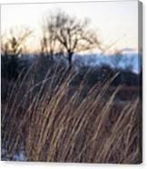 Winter Prairie Grass At Dusk Canvas Print