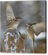 Winter Quarrel Canvas Print