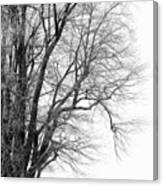 Winter Red And White  Canvas Print