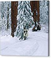 Winter Road Into Sequoia National Park Canvas Print