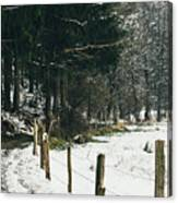 Winter Rural Pathway Canvas Print