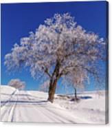 Winter Scene Genessee, Id Canvas Print