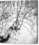 Winter Shrubs, New Hampshire Canvas Print