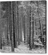 Winter, Slaley Woods Canvas Print
