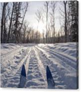 Winter Sport X-country Skis In Sunny Forest Tracks Canvas Print
