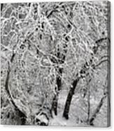 Winter Storm Skylar Canvas Print