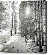 Winter Sunshine Forest Shades Of Gray Canvas Print