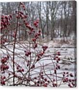 Winter Time Frozen Fruit Canvas Print