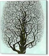 Winter Tree 2009 Canvas Print
