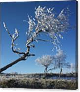 Winter Tree. Canvas Print