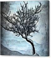 Winter Tree II Canvas Print