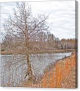 Winter Tree On Pond Shore Canvas Print