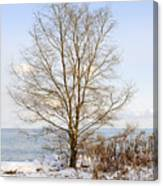 Winter Tree On Shore Canvas Print