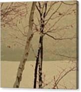 Winter Tree Over Bay Canvas Print